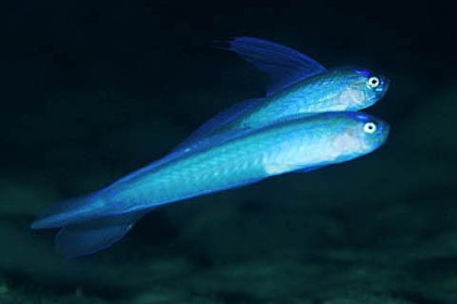 goby001-2